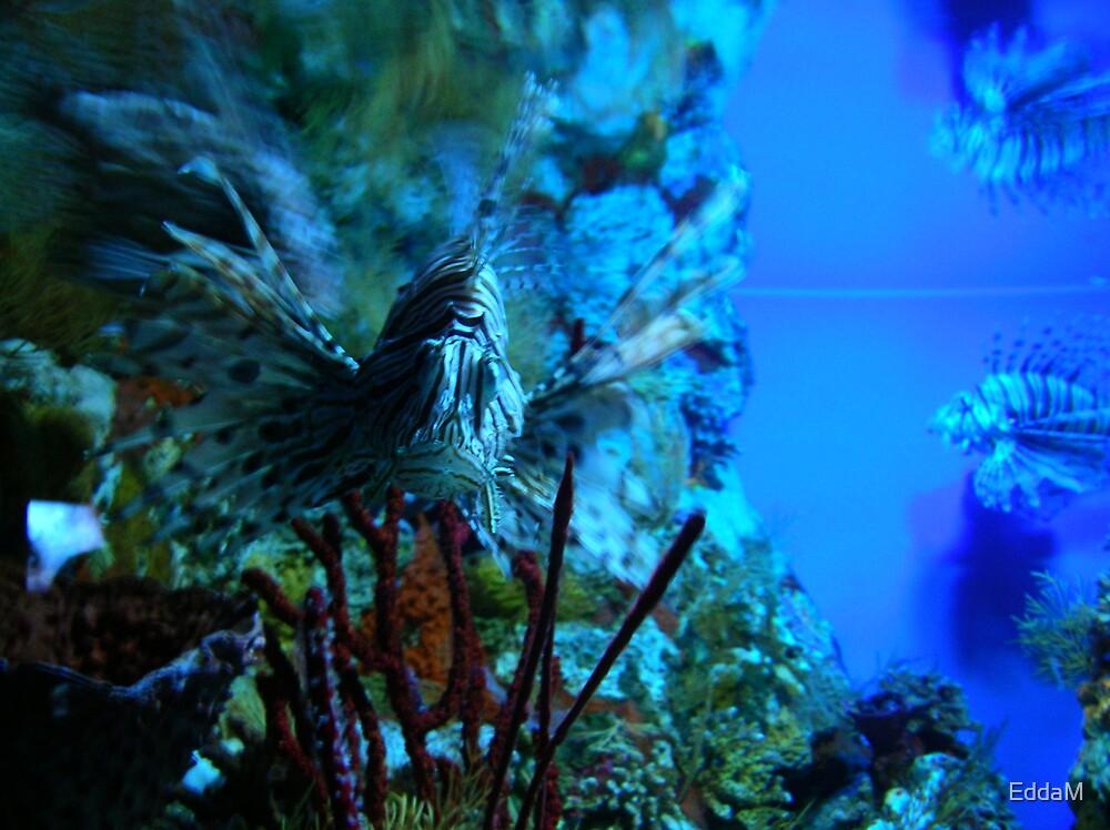 fish by EddaM