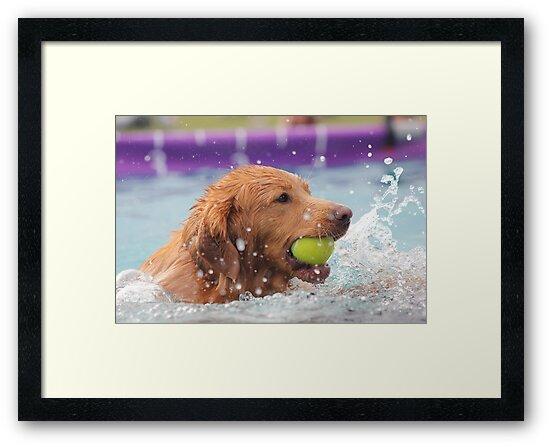 Splashing Around by Vicki Spindler (VHS Photography)