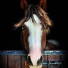 Beauty behind the stable door by missmoneypenny
