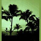 Laguna Palms by Dana Roper