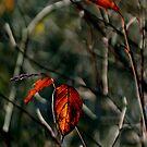 Autumn's Last Dance by Wayne King