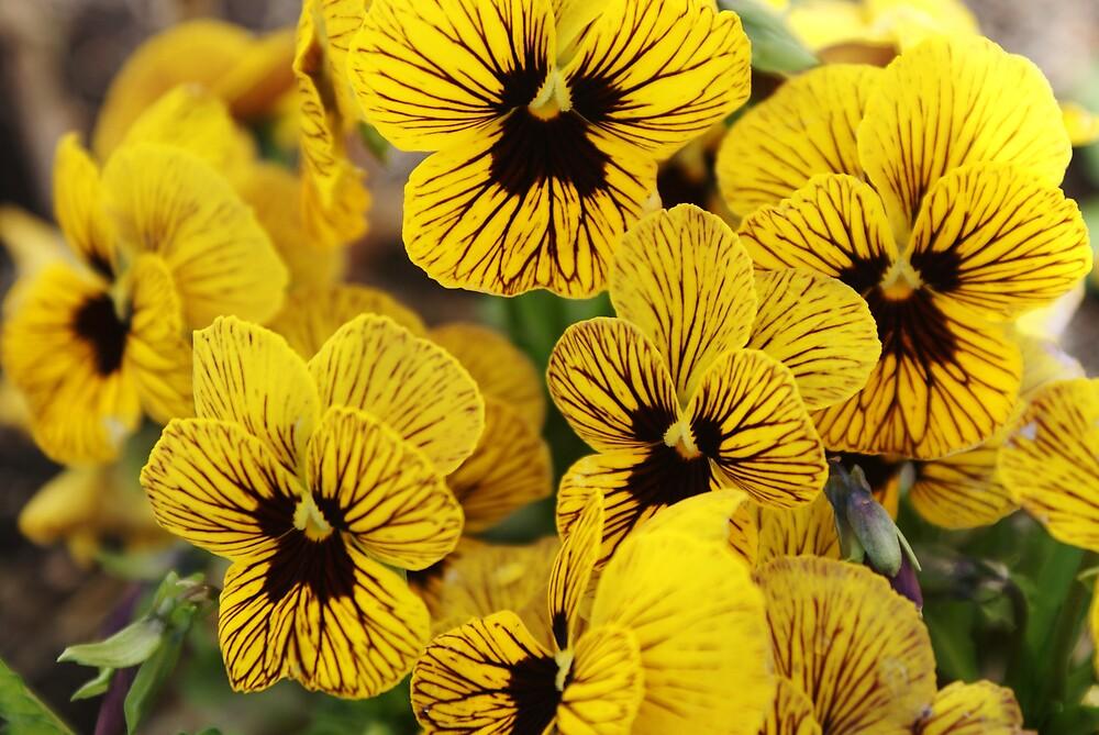 flowers by Joey  Visser