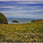 Anglesey coastline by therightprofile