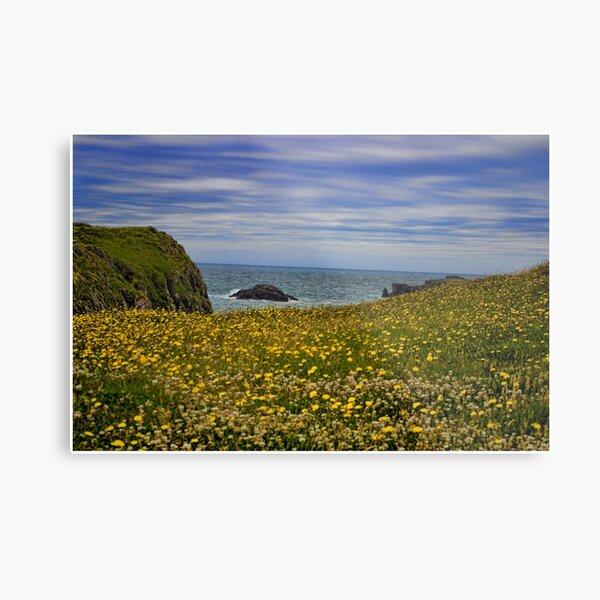 Anglesey coastline Metal Print