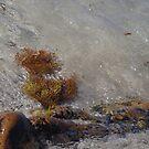 Miniature Landscape In A Rock Pool by lezvee