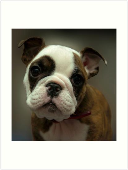 Gizmo's Stare by Dennis Jones - CameraView