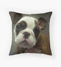 Gizmo's Stare Throw Pillow