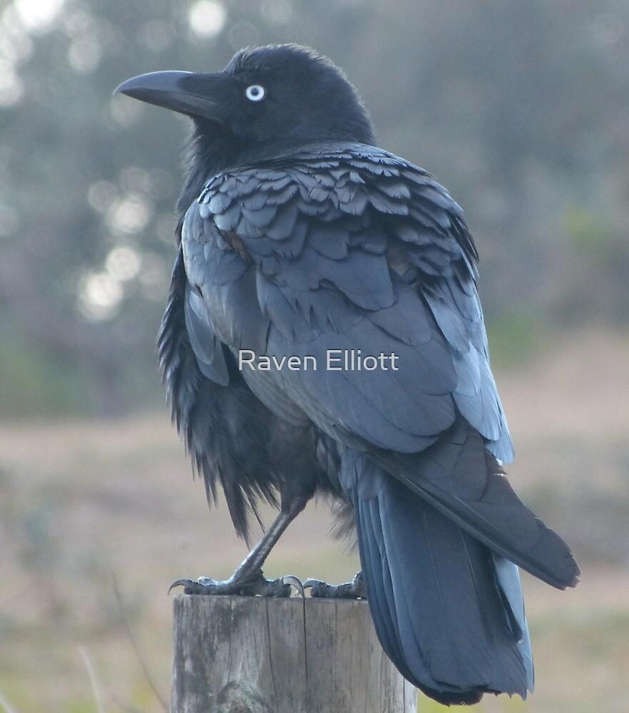 Raven 3 by Queen Elliott