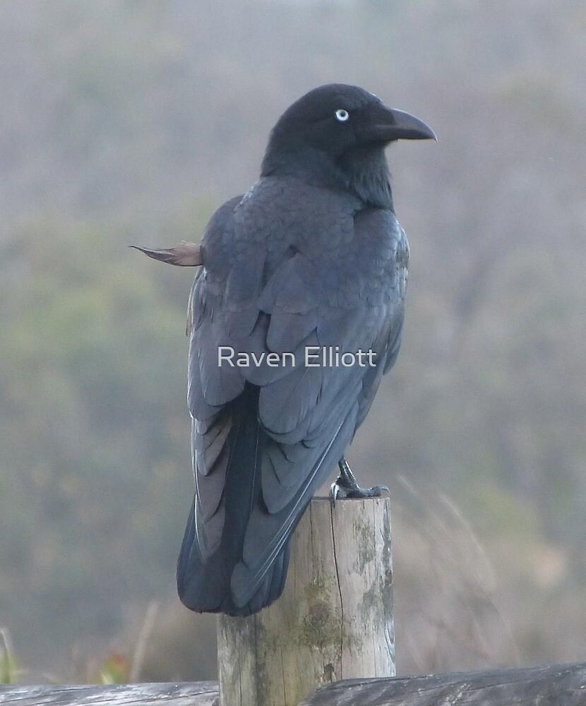 Raven 4  by Queen Elliott