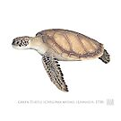 Green Turtle (Chelonia mydas) by StickFigureFish