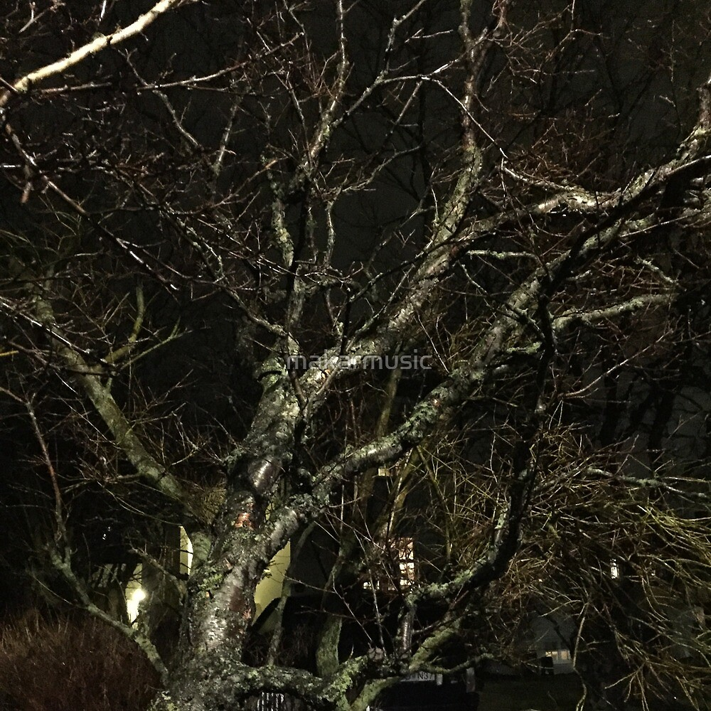 Iceland Tree at night branches by makarmusic