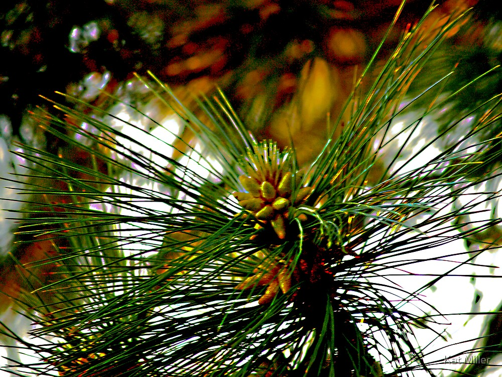 Pine Cone Glow by Kat Miller