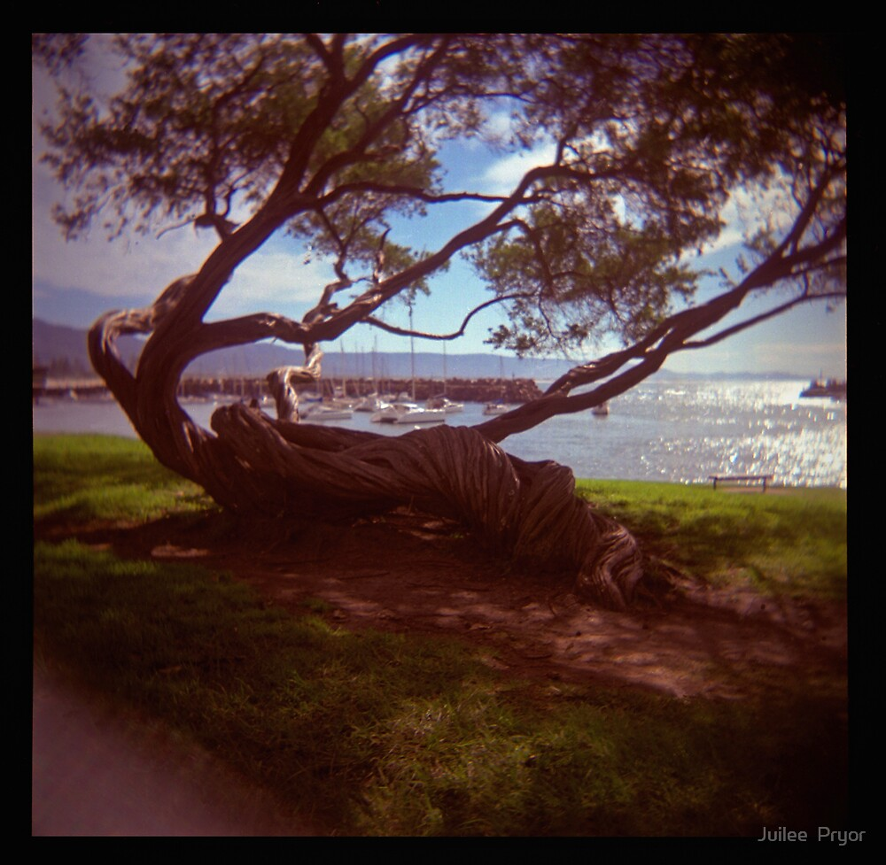 holga madness.....twisted tree down by the sea by Juilee  Pryor