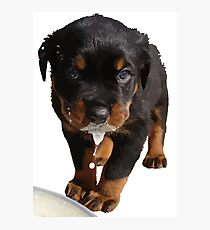 Cute Rottweiler Puppy WIth Milk On Muzzle Photographic Print