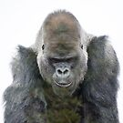 Gorilla King  by JohnYoung