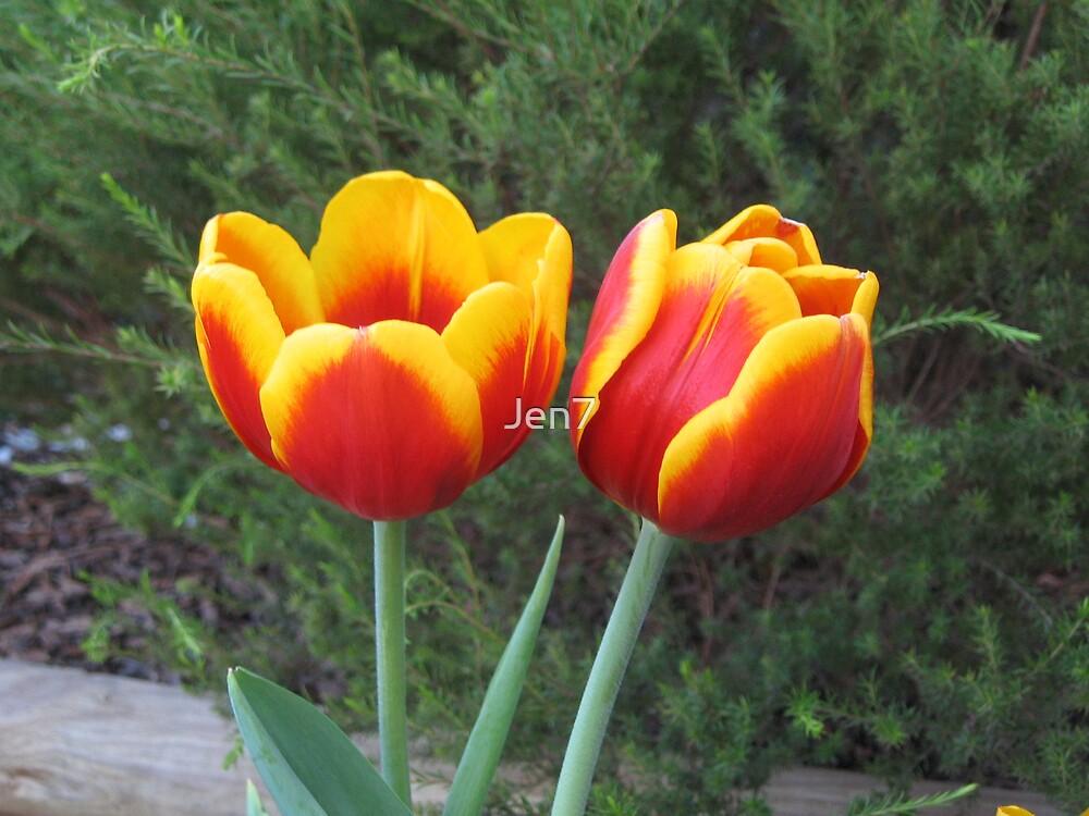 Tulips by Jen7