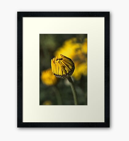 Daisy Yellow Framed Print