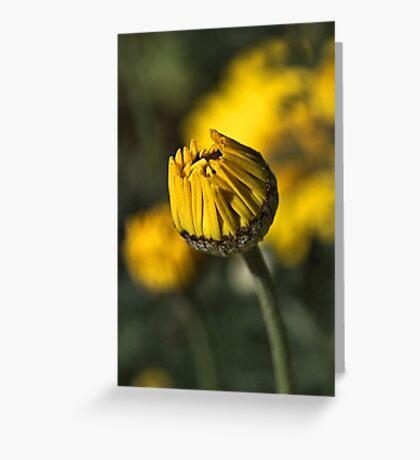 Daisy Yellow Greeting Card