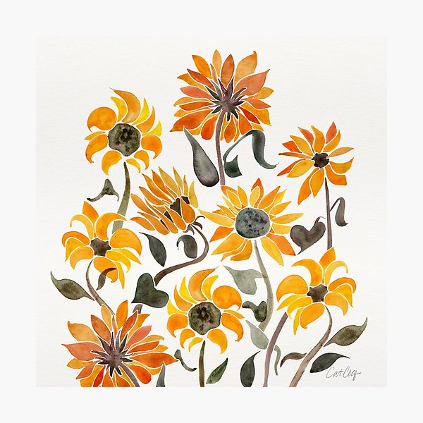 Sunflower Watercolor – Yellow & Black Palette Photographic Print