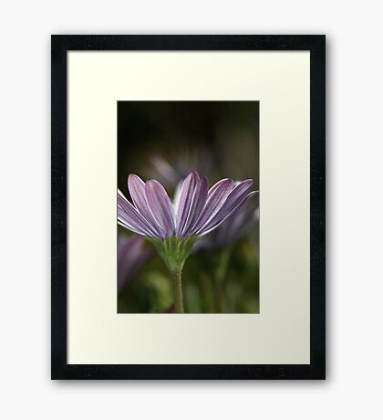 Daisy Delight Framed Print