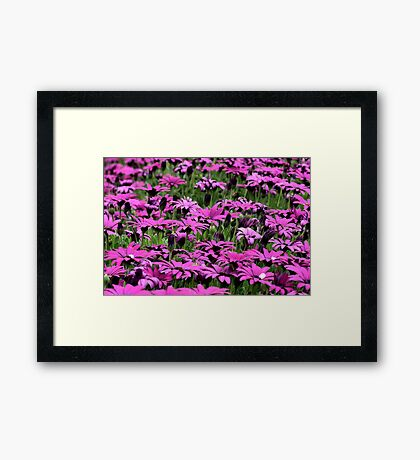 Daisies & More . . . Framed Print