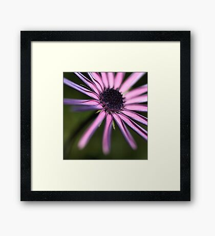Reaching Daisy Framed Print