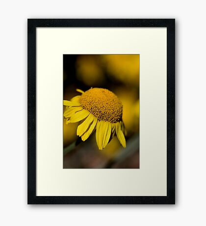 Forgotten Beauty..... Framed Print