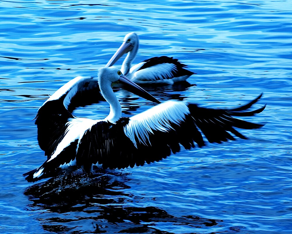a most regal bird  by alfarman
