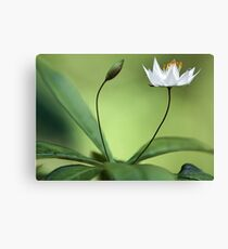 Starflower With New Bud Canvas Print