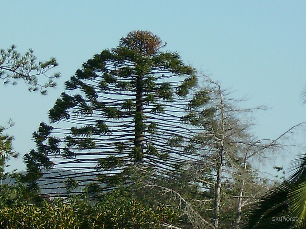 Odd Tree by skyhorse