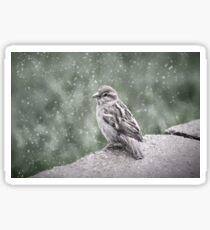Winter Sparrow In Snow Sticker
