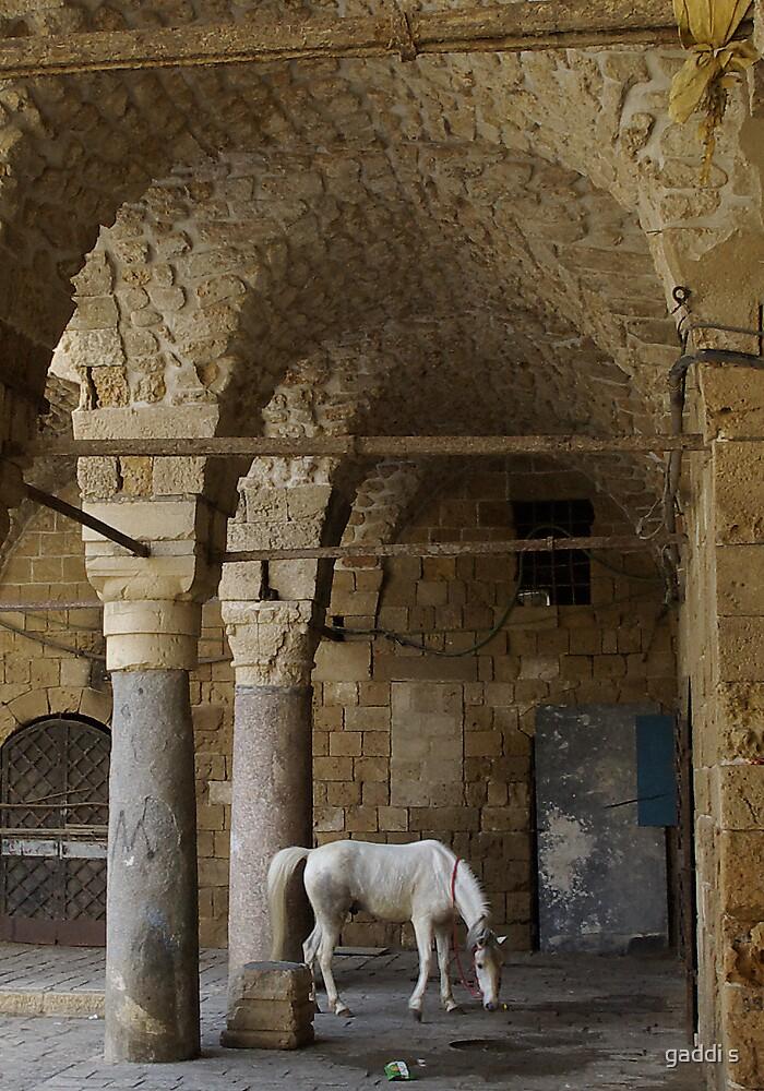 horse by gaddi s