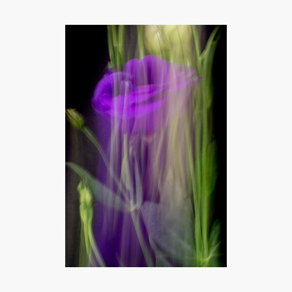 Fleur Blur-Abstract Purple Flower Photo Photographic Print
