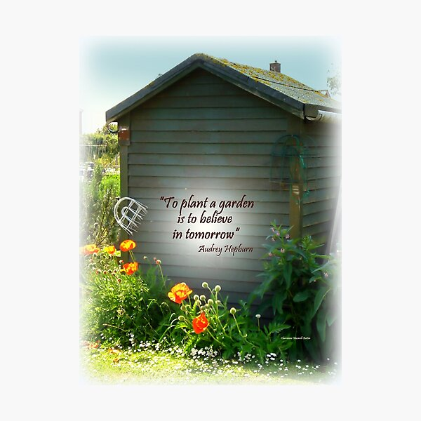 Brightening the Garden  Shed Photographic Print