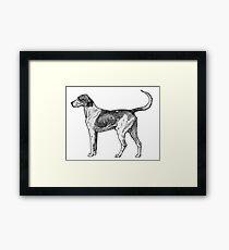 Foxhound Framed Print