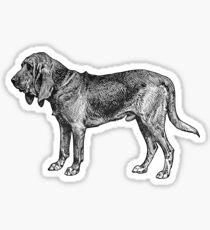 Bloodhound Sticker