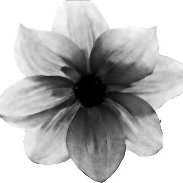 Wildflower Black and White by copperhead