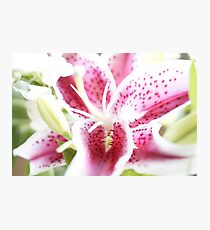 Beautiful Lily in Light Photographic Print