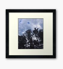 Trees Under The Sky- Original Photo Framed Print