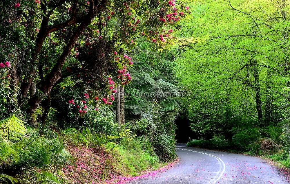 Spring on The Avenue - Mt Wilson NSW by Bev Woodman