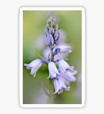 Blue Bells Sticker