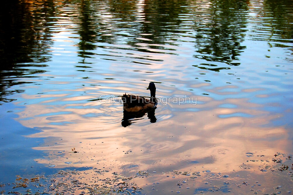little duck by CriGa Photography