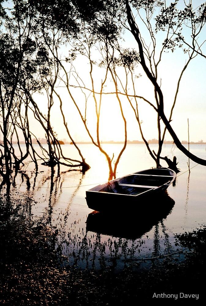 Mangroves - Stockton by Anthony Davey