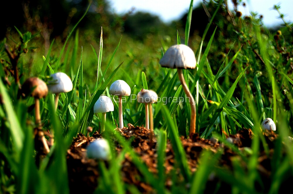 Mushrooms by CriGa Photography