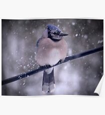 Bluejay In A Snowstorm Poster