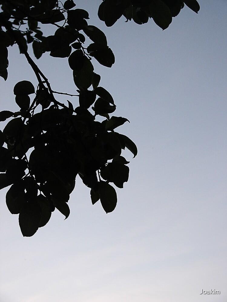 Leafy by Joakim