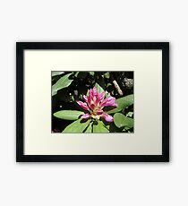 Ready To Bloom Framed Print