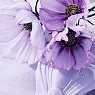 Three Lavender Cosmos by Sandra Foster