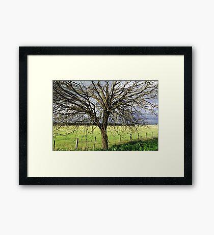 Greenvale,Victoria,Australia Framed Print