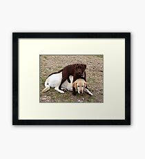 Care For A Sit? Framed Print